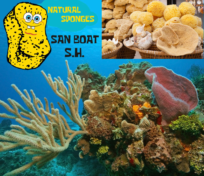 San Boat – Εμπόριο Φυσικών Σφουγγαριών και Κοχυλιών